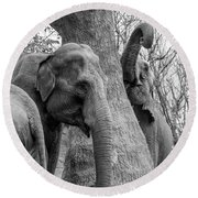 Elephant Tree Black And White  Round Beach Towel