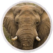 Elephant Watching Round Beach Towel