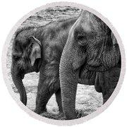 Elephants Bw Round Beach Towel
