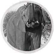 Elephant's Supper Time In Black And White Round Beach Towel