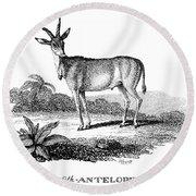 Elk Antelope Round Beach Towel