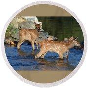 Elk Calf Crossing River 1 Round Beach Towel