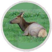 Elk Cow Round Beach Towel