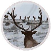 Elk Herd Round Beach Towel