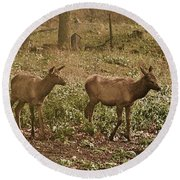 Elk In The Early Morning Round Beach Towel