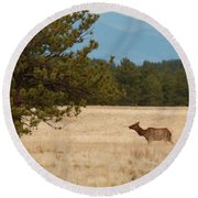 Elk In The Fossil Beds Round Beach Towel