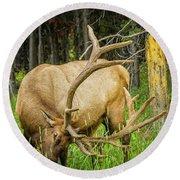 Elk In The Woods Round Beach Towel