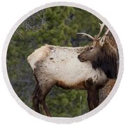 Elk Looking Back Round Beach Towel