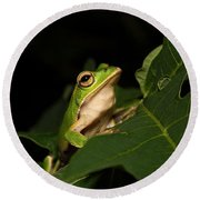 Emerald Eye Tree Frog Round Beach Towel