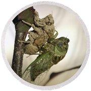 Emerging - Cicada 2 Round Beach Towel