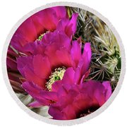 Engleman's Hedgehog Cactus  Round Beach Towel
