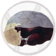 Enlarged Spleen With Infarct Round Beach Towel