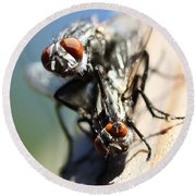Entomologists Discover Why People Want To Be A Fly On The Wall Round Beach Towel