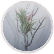 Epiphyte In The Fog Round Beach Towel