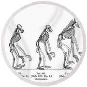 Ernst Haeckel, Evolution Of Man, 1879 Round Beach Towel