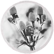Eryngium #flower #flowers Round Beach Towel
