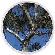 Eucalyptus Round Beach Towel