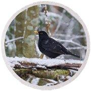 Eurasian Blackbird In The Snow Round Beach Towel