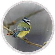Eurasian Blue Tit With Snow Round Beach Towel