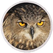 Eurasian Eagle Owl Portrait Round Beach Towel