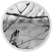 European Goldfinch 1 Round Beach Towel