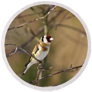 European Goldfinch 2 Round Beach Towel