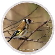 European Goldfinch 5 Round Beach Towel