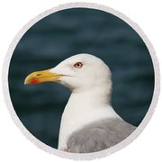 European Herring Gull Portrait Round Beach Towel