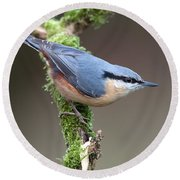 European Nuthatch Round Beach Towel