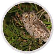 European Scops Owl  Round Beach Towel