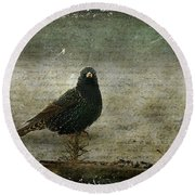 European Starling Round Beach Towel