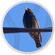 European Starling Trasparent Background Round Beach Towel