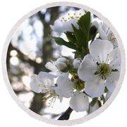 Evening Show - Cherry Blossoms Round Beach Towel