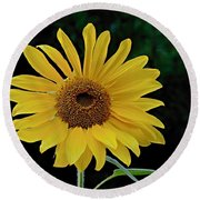 Evening Sunflower Round Beach Towel