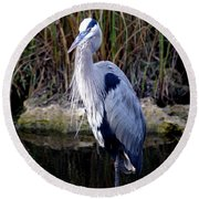 Everglades Heron Round Beach Towel