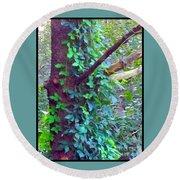 Evergreen Tree With Green Vine Round Beach Towel
