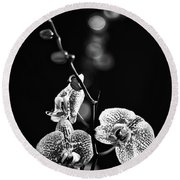 Exotic Orchid Bw Round Beach Towel
