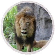 Expressive Male Lion Prowling Around In Nature Round Beach Towel