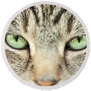 Extreme Close Up Tabby Cat Round Beach Towel