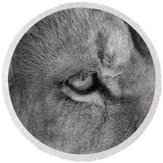 Eye Of The Lion #2  Black And White  Round Beach Towel