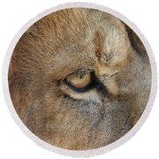 Eye Of The Lion #2 Round Beach Towel