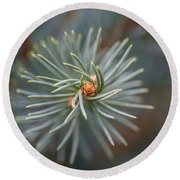 Eye Of The Pine Round Beach Towel