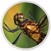 Eye To Eye Dragonfly Round Beach Towel