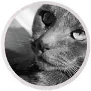 Eyes Of Russian Blue Round Beach Towel