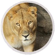 Eyes Of The Lioness Round Beach Towel