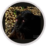 Eyes Of The Panther Round Beach Towel