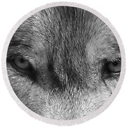 Eyes Of The Wild Round Beach Towel