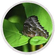 Eyespots On The Closed Wings Of A Blue Morpho Butterfly Round Beach Towel