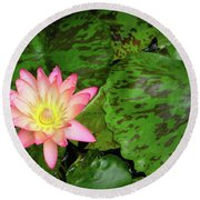 F6 Water Lily Round Beach Towel