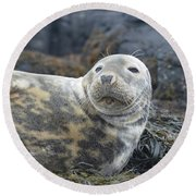 Face Of A Gray Seal Round Beach Towel